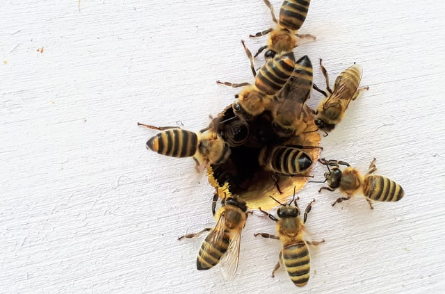 bees gathering on wood
